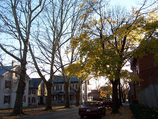 A Tree-Lined Street